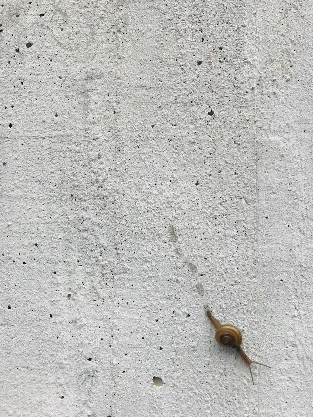 brow snail on gray wall