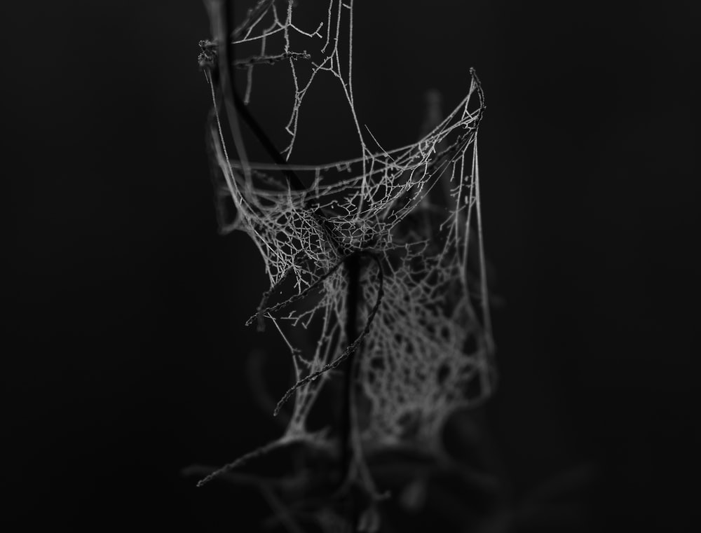grayscale photo of a spider's web