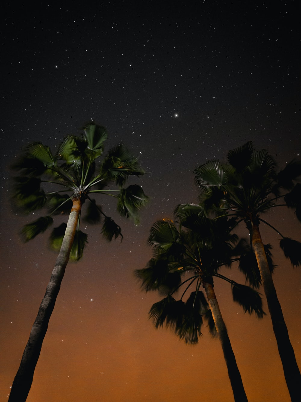 three coconut trees during nighttime
