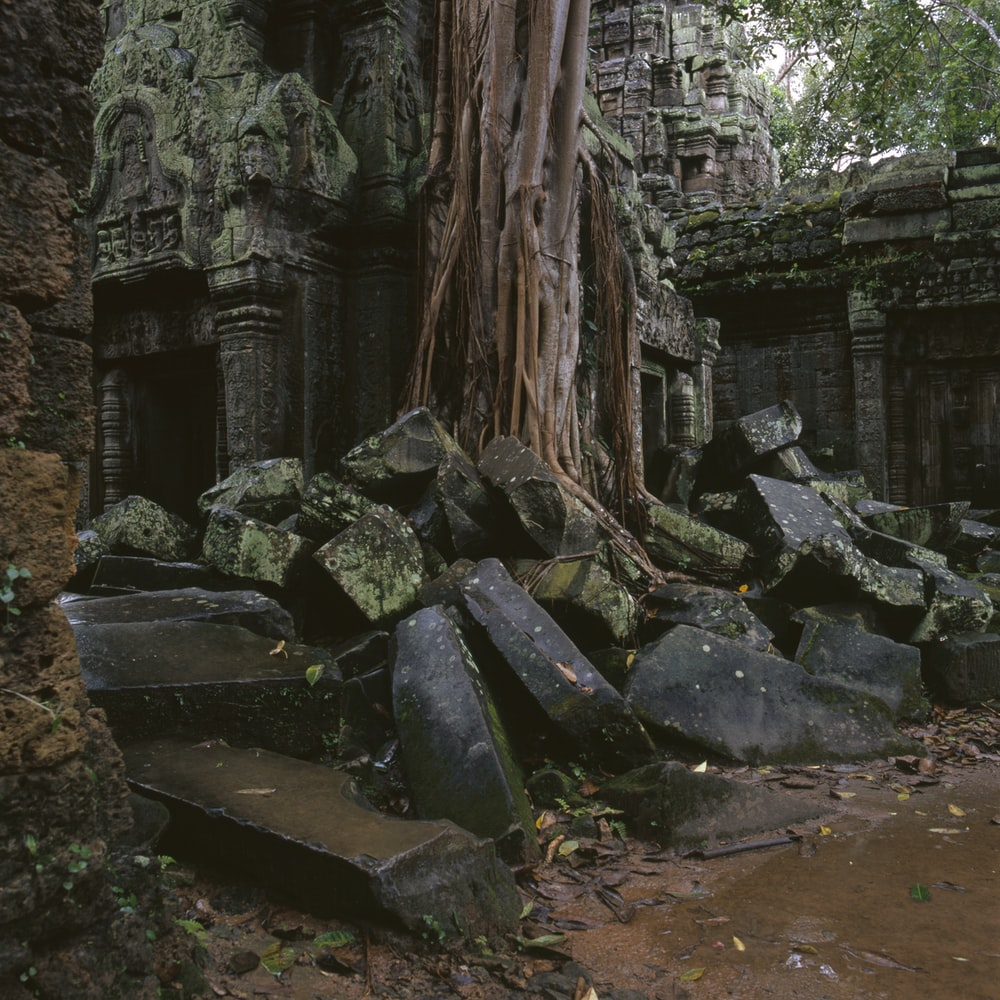 rock ruins by tree during daytime