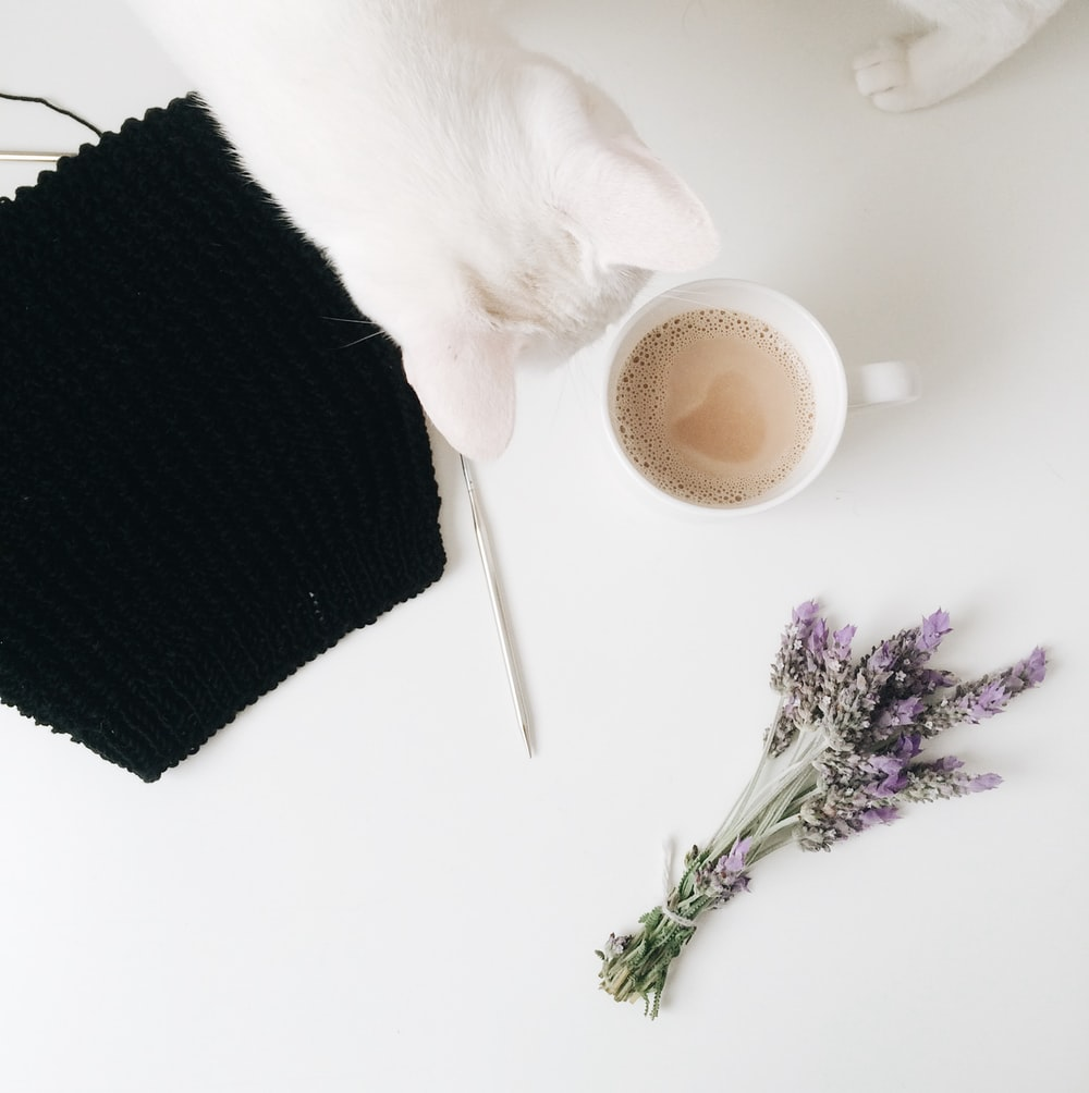flatlay photo of white cat, cup of latte, and purple flowers
