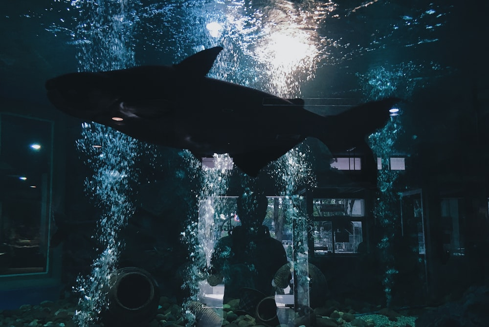 person standing in front of fish tank with black fish