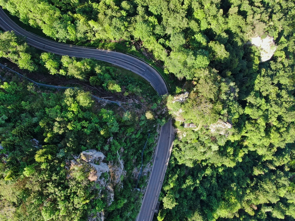 high angle photography of gray concrete road surrounded with trees