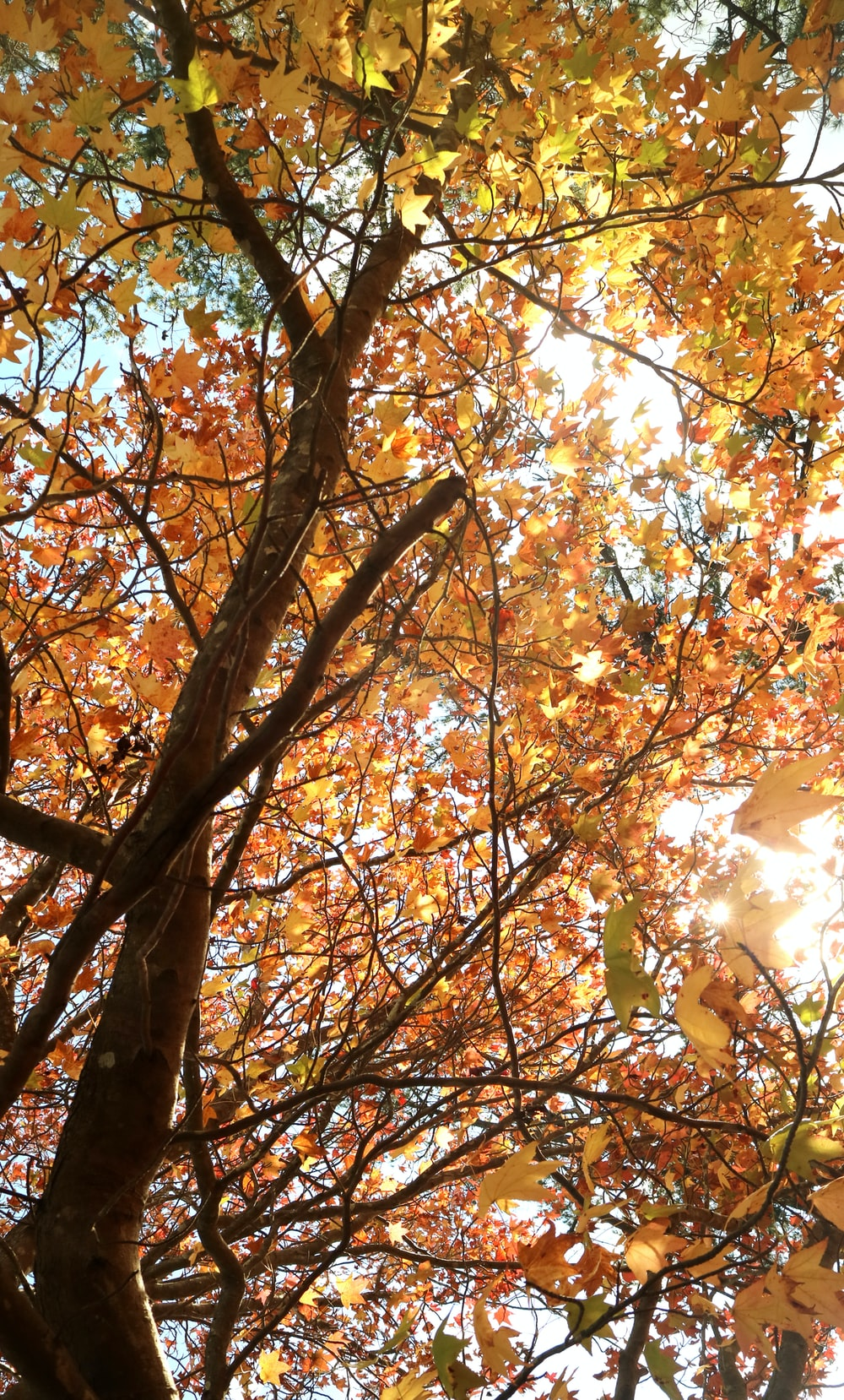low angle photography of brown leaf tree