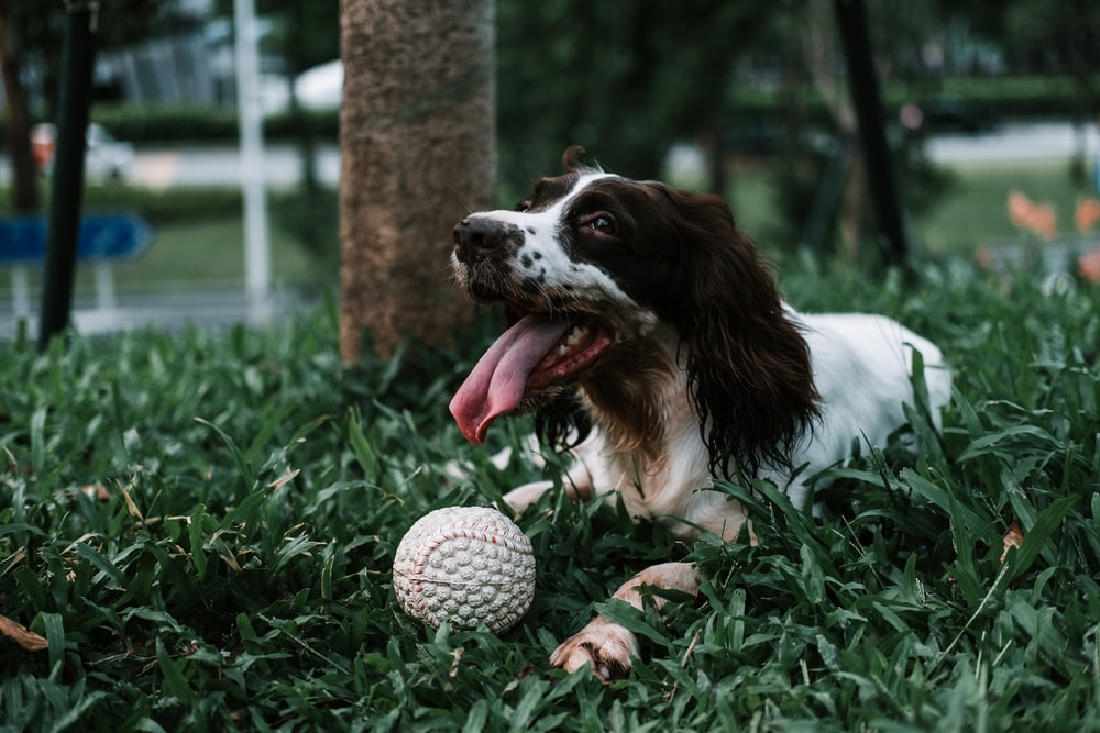 dog playing with ball during daytime
