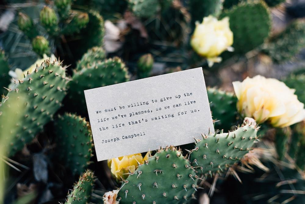 card on cactus