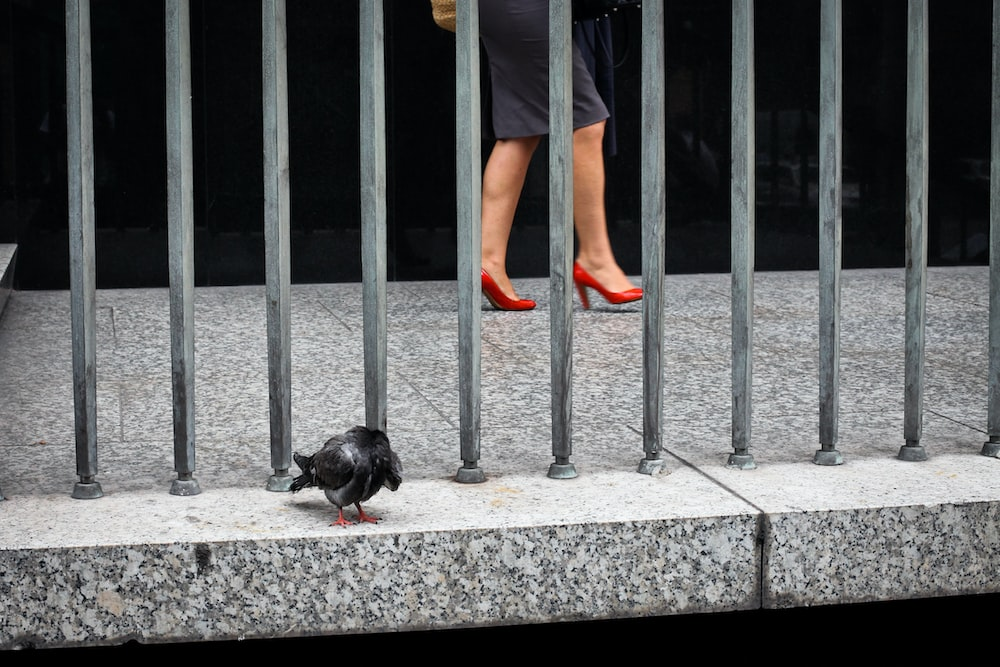bird on concrete surface beside metal bars and walking woman
