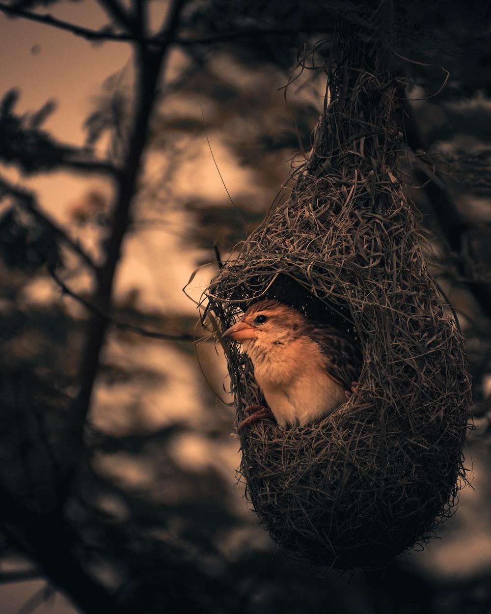 brown bird inside brown birds nest