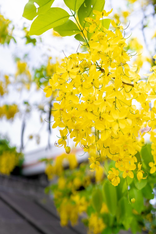 yellow petaled