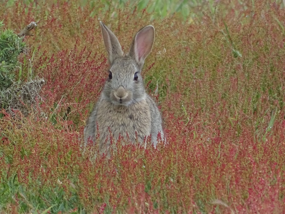brown rabbit on field