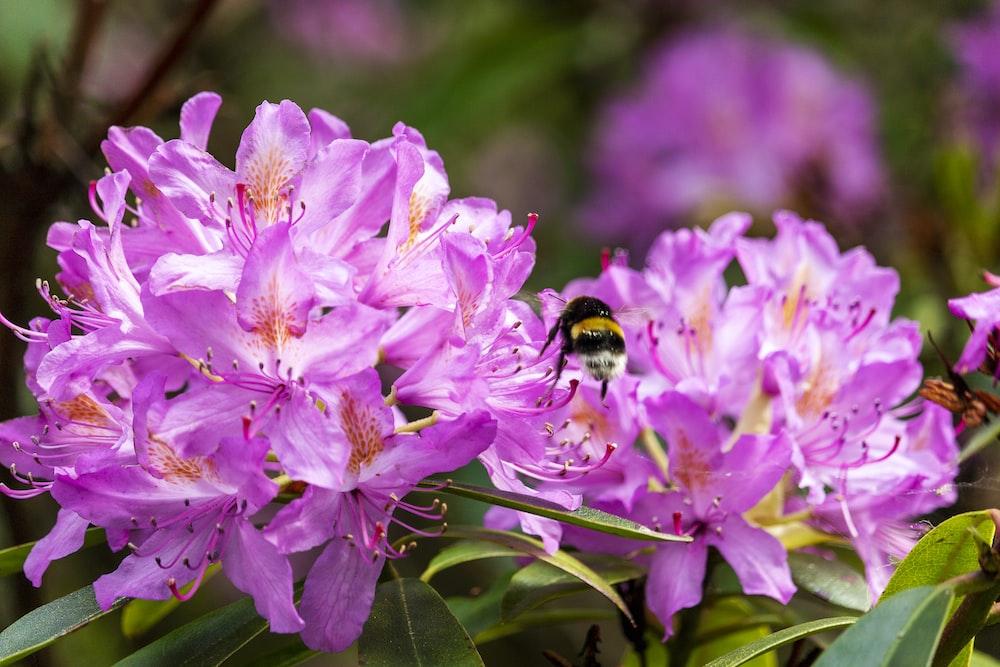 purple petaled flwoer