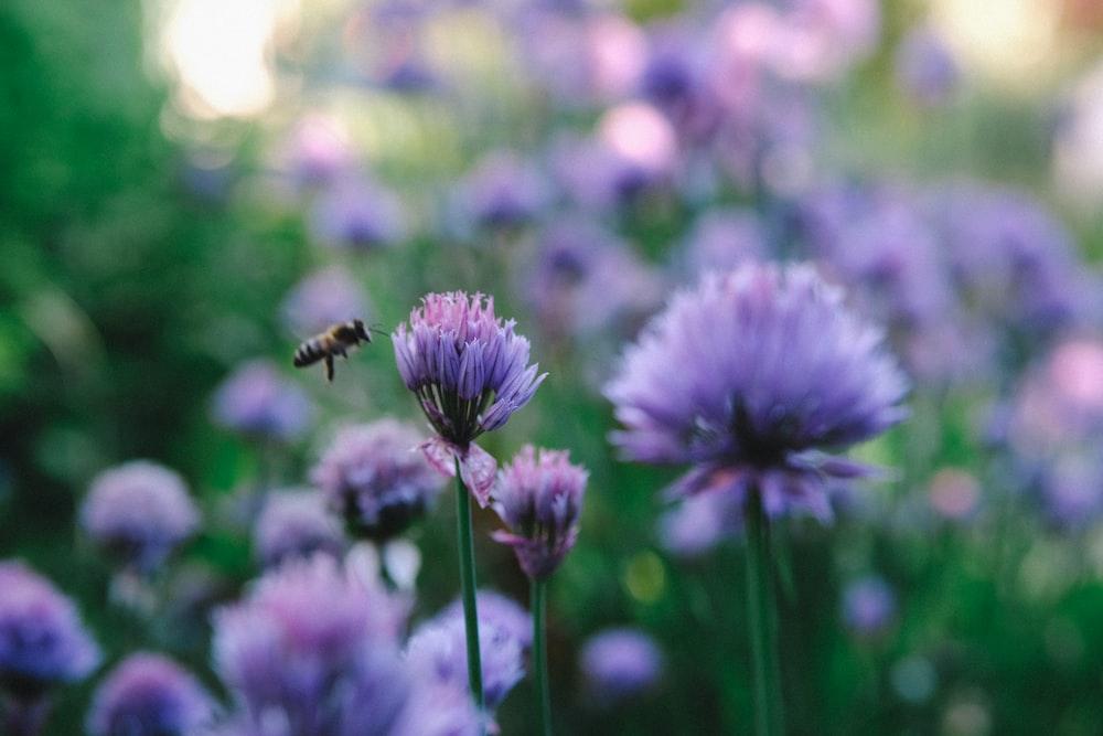 bee beside purple-petaled flower