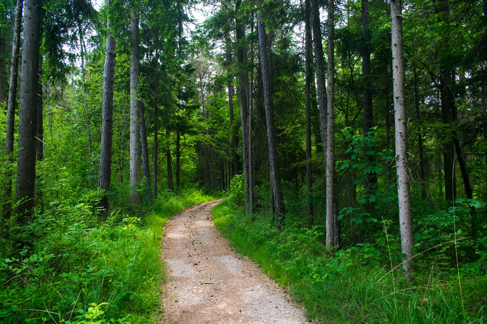 dirt trail across the woods