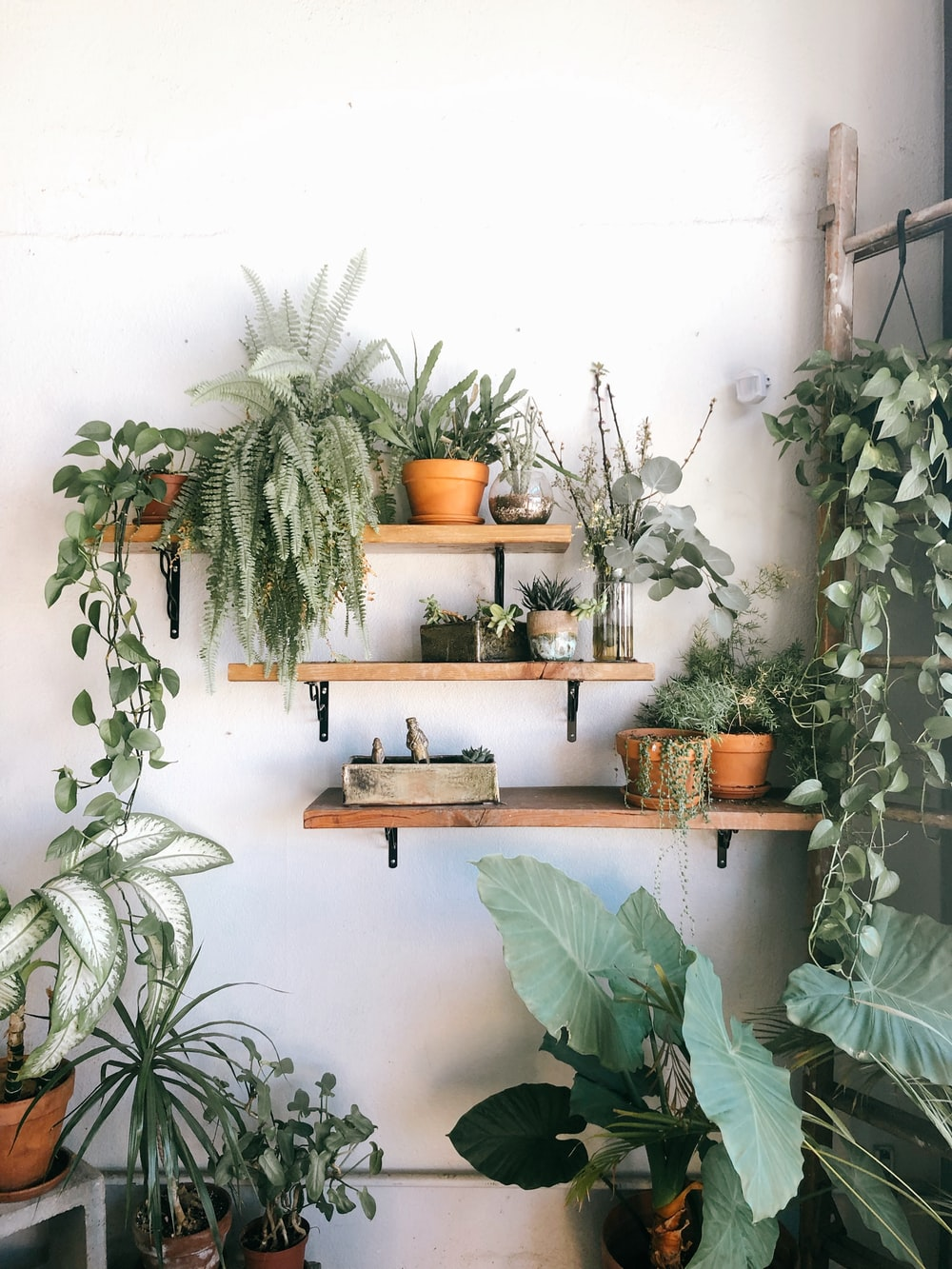 plants in pots on floating shelves