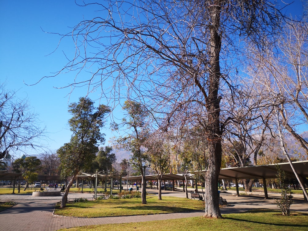 leafless tree during daytime