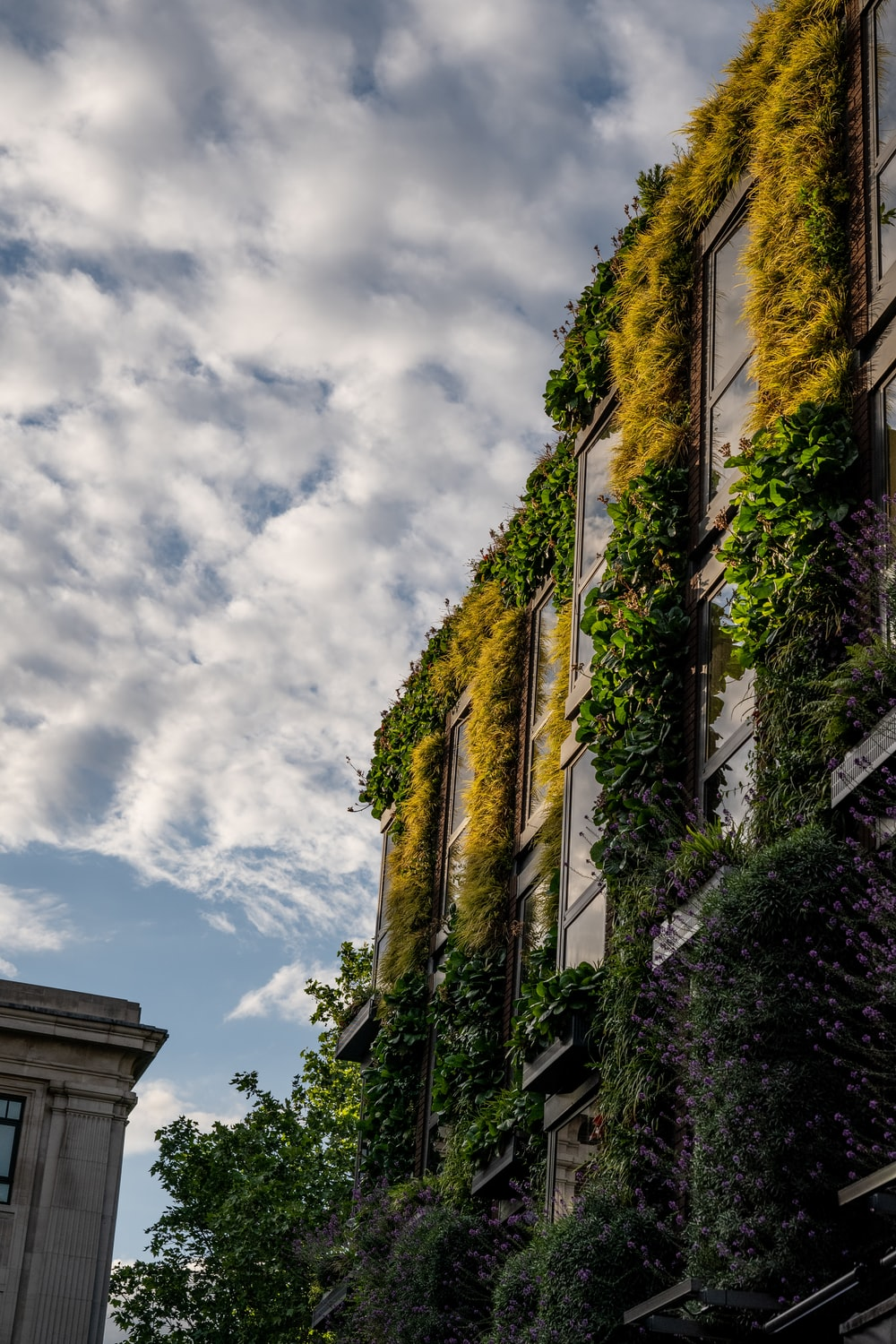 green ivy plants growing on side of building