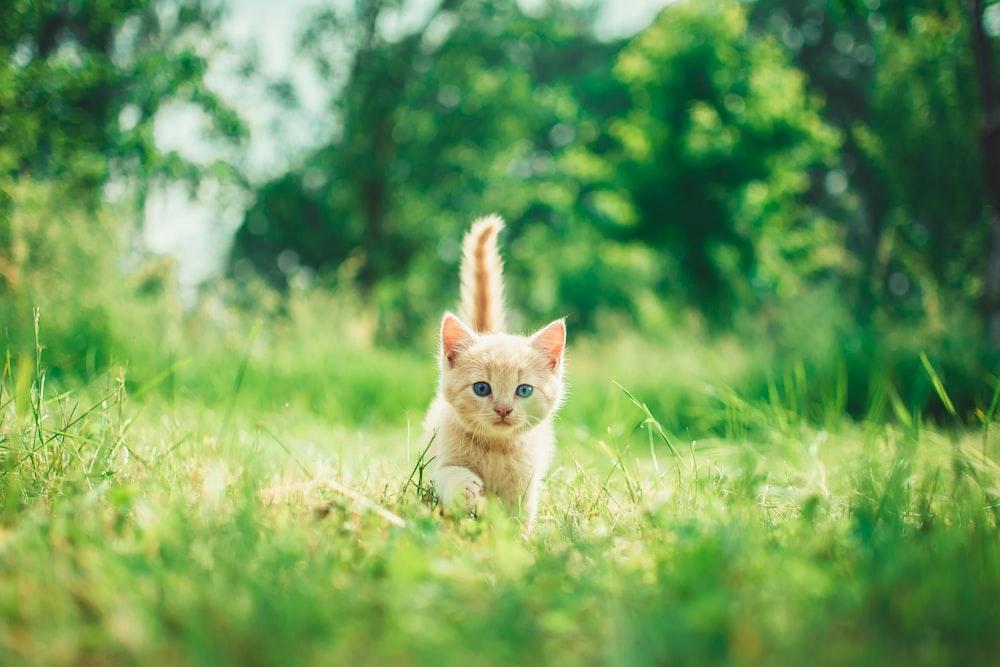 orange tabby kitten in grasses