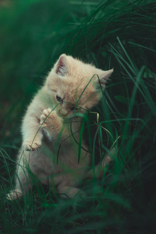 cat near grass