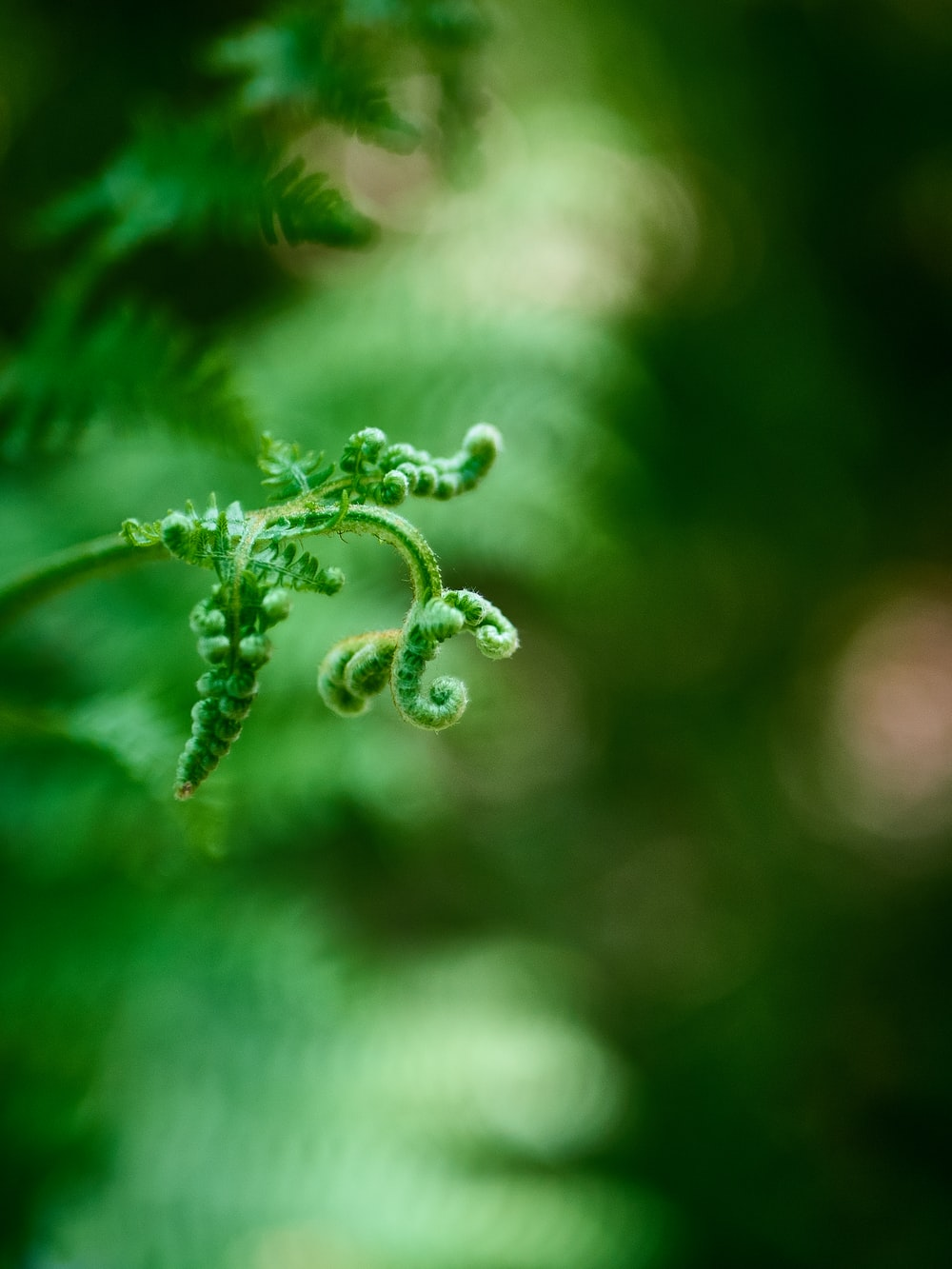 green-leafed plant close-up photography