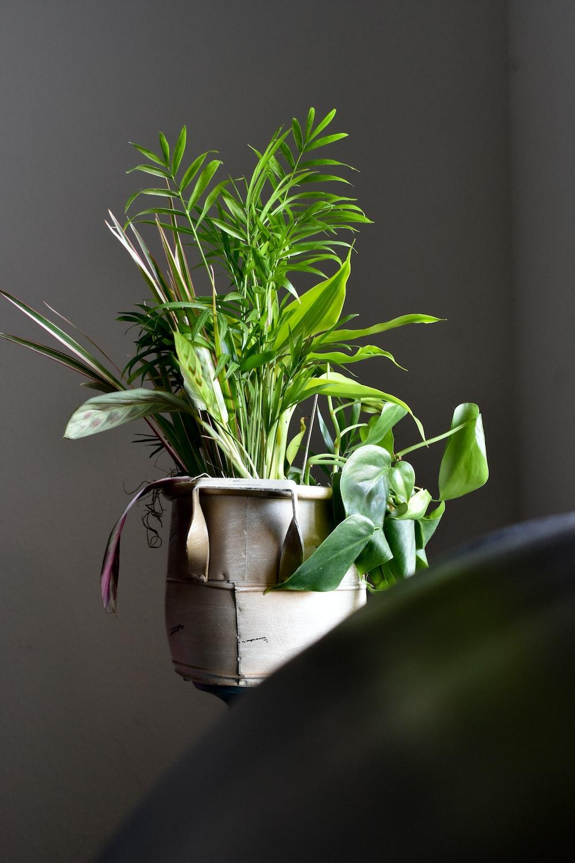 green leaf plants in gray pot