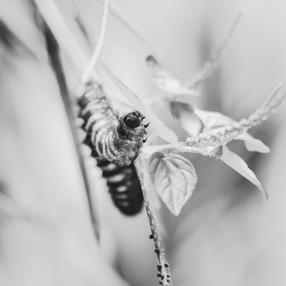 grayscale photo of caterpillar