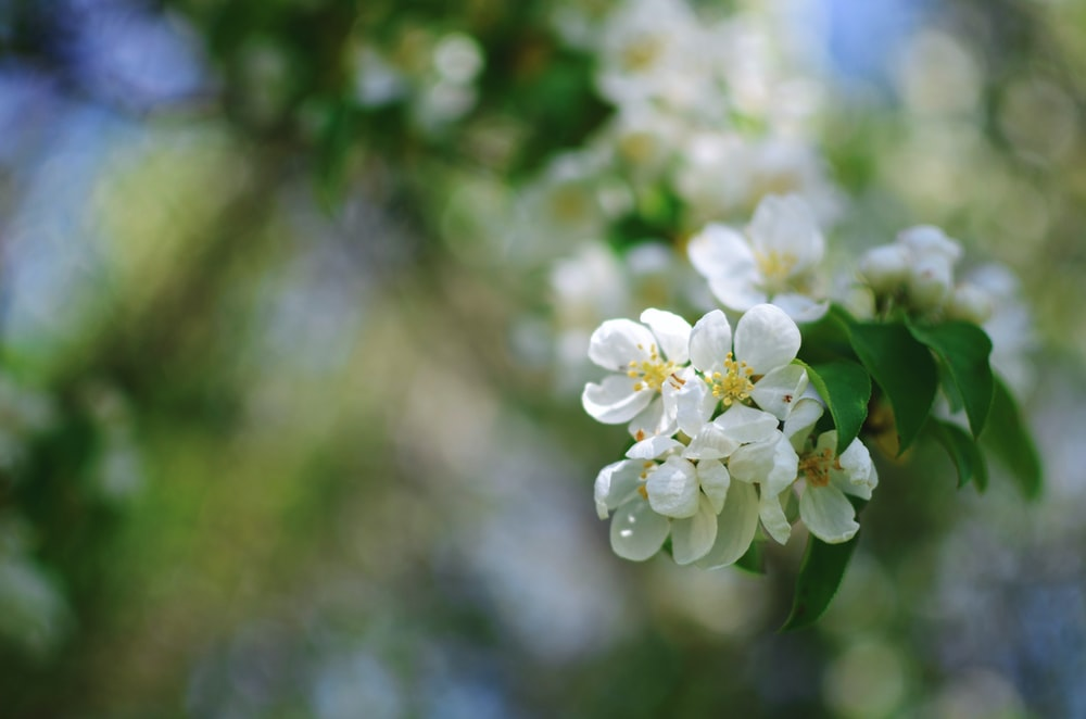selective focus photo of white flower