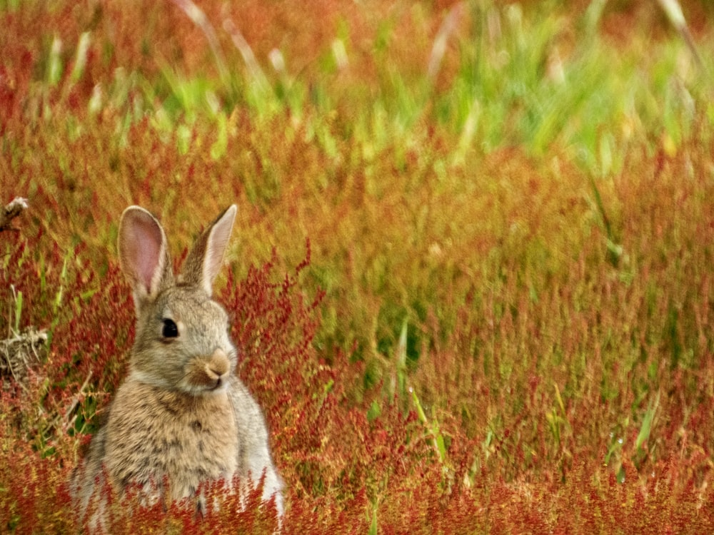gray rabbit sitting on grass