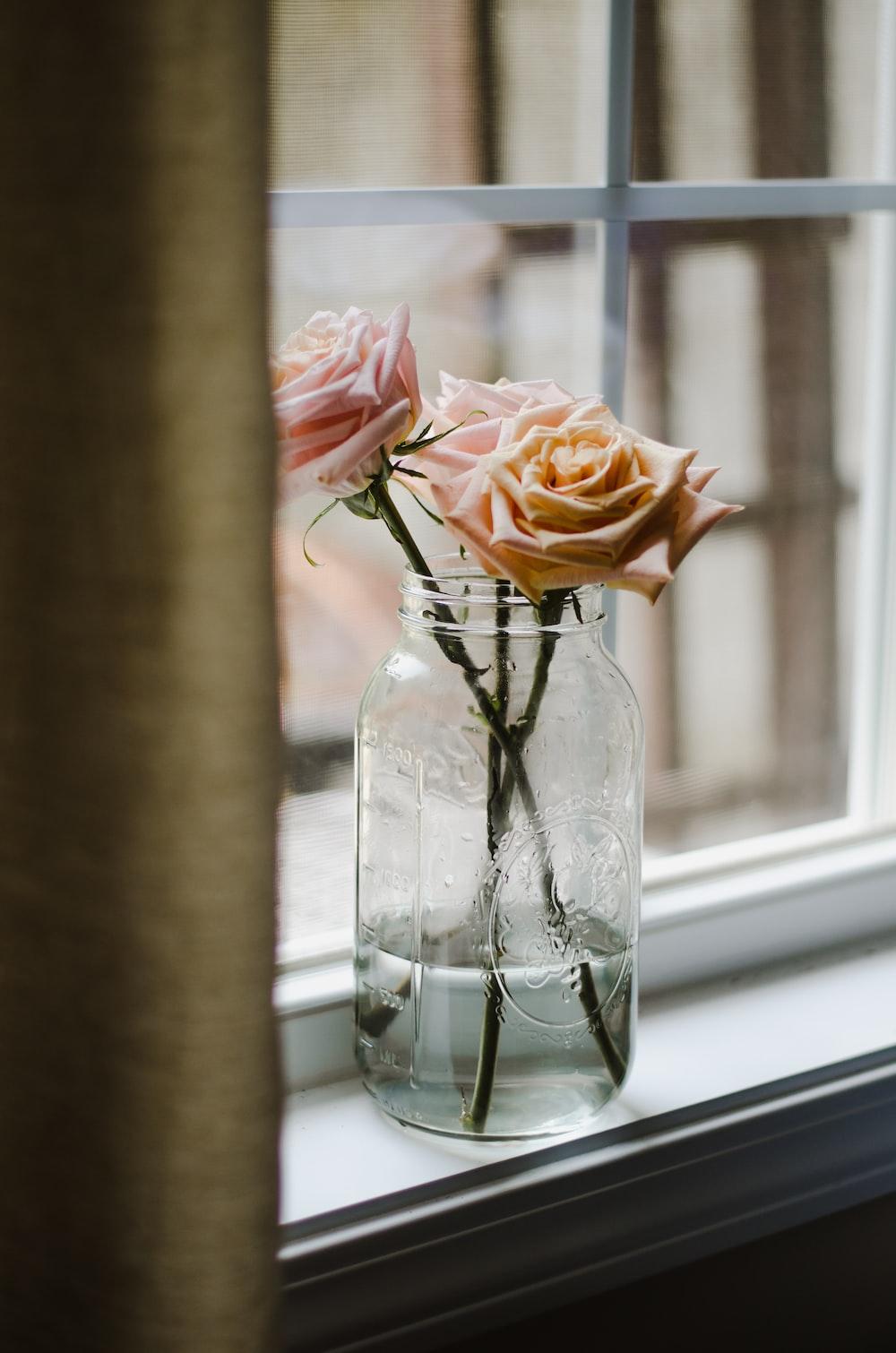 pink petaled flower on jar