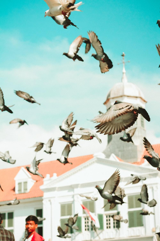 flight of bird