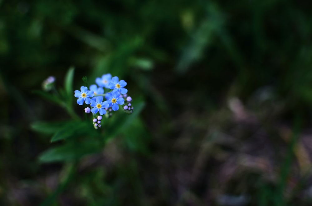 selective focus photo of blue flower