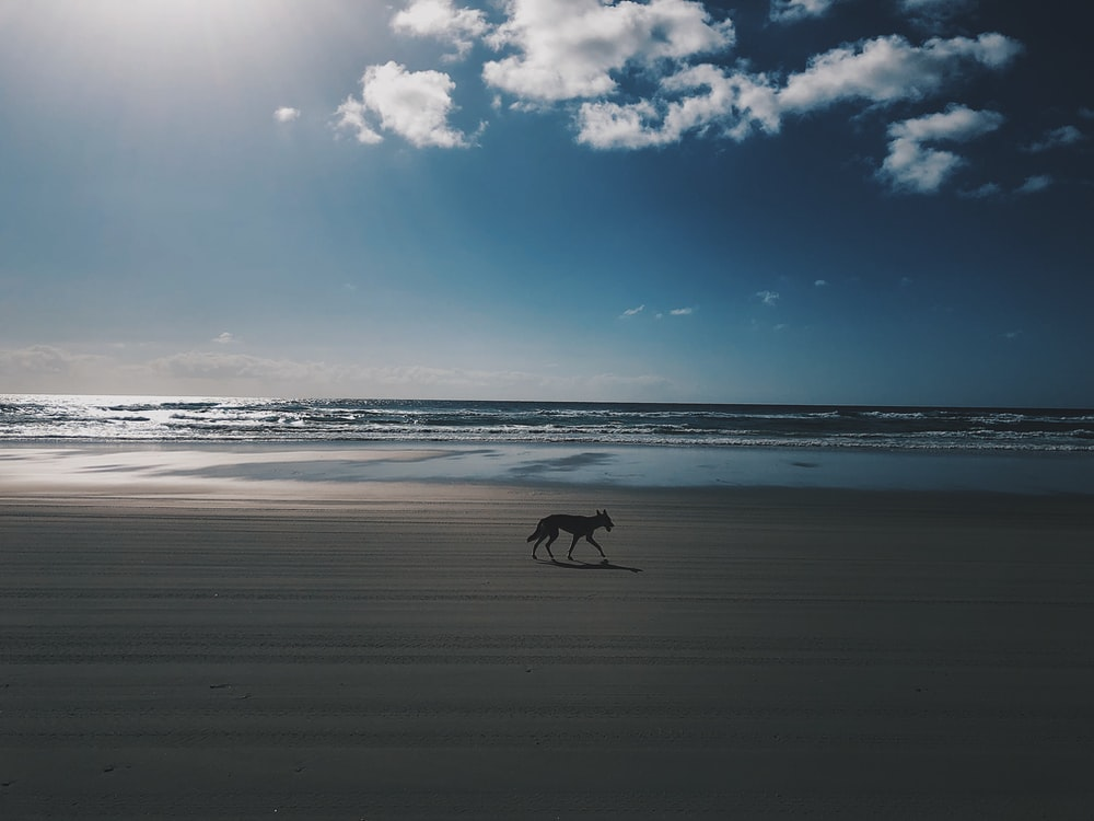 silhouette photo of dog