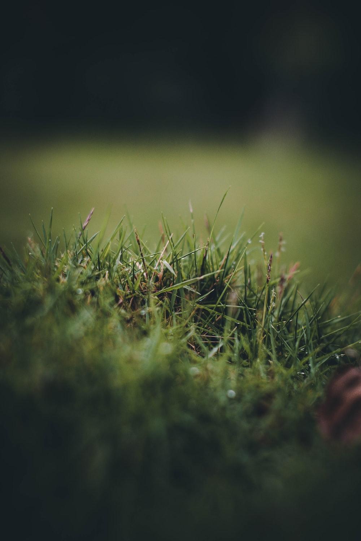 sand for artificial grass