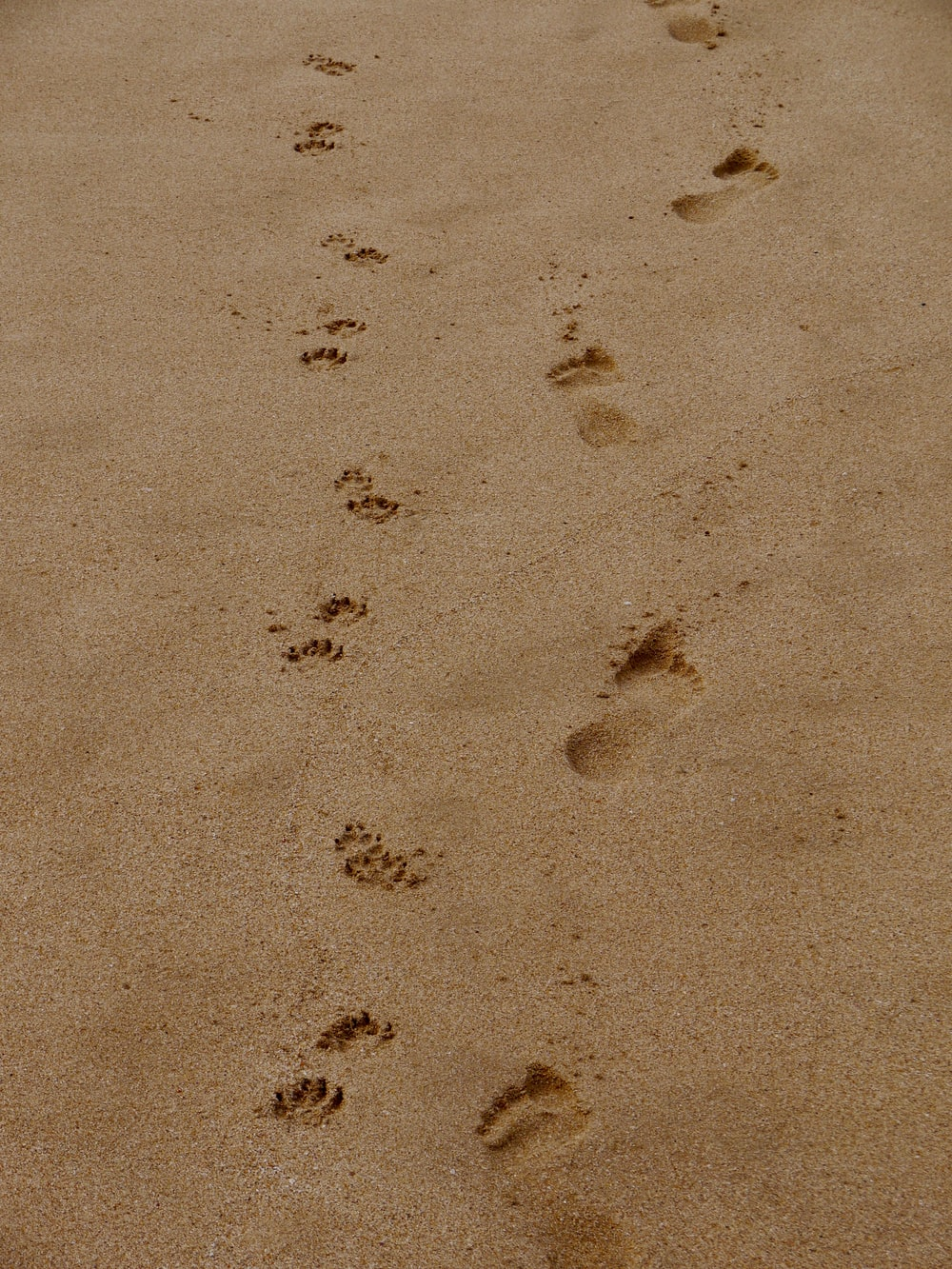 Footprints In The Sand Pictures | Download Free Images on ...