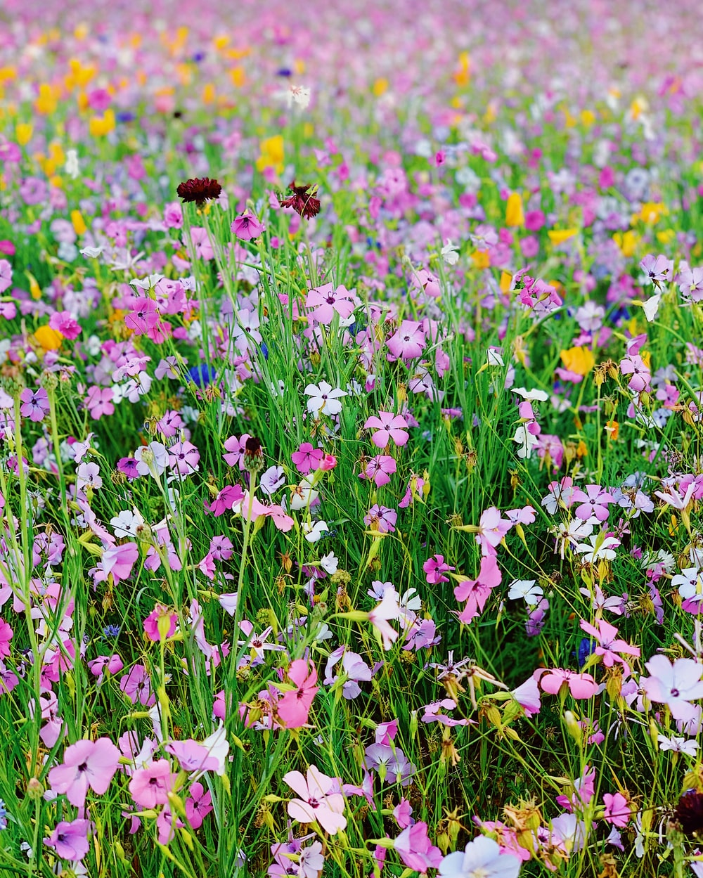 bed of pink and yellow petaled flowers