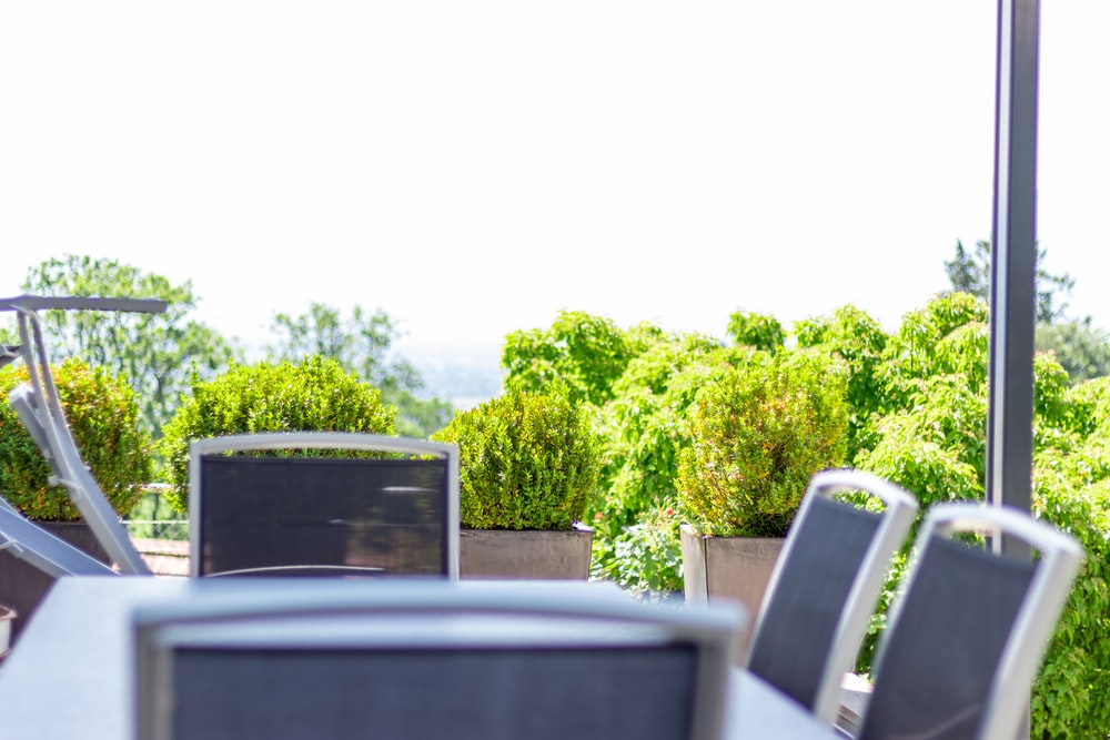 table with chairs near green outdoor plant