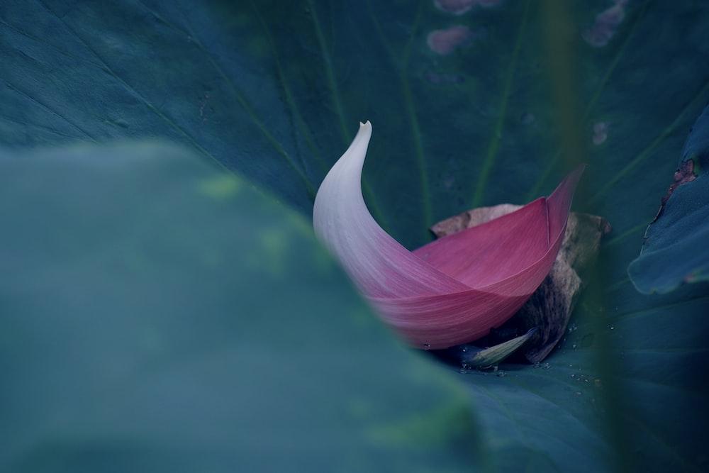 pink flower petal on leaf