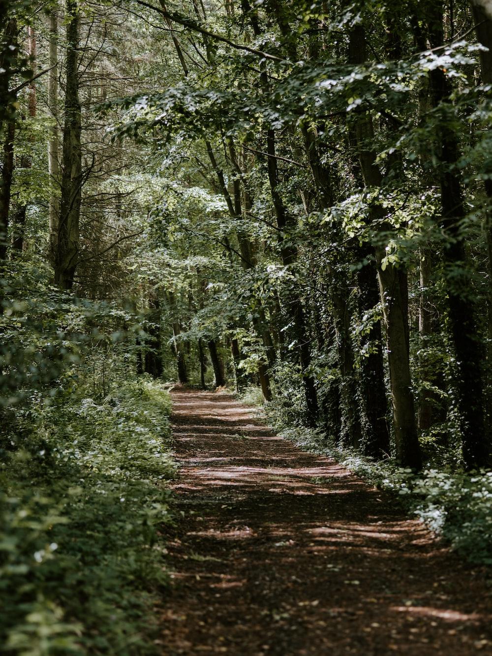 dirt road between green trees