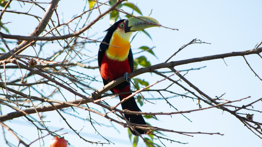 red and yellow bird perching