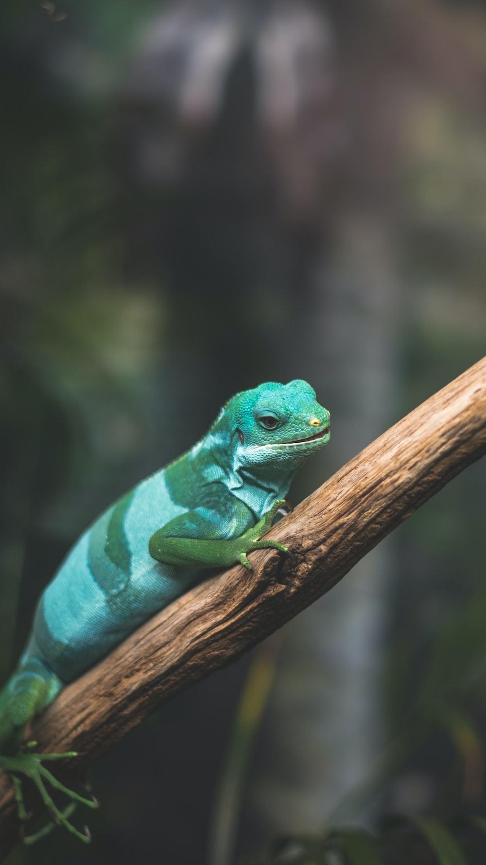 green lizard crawling on tree branch