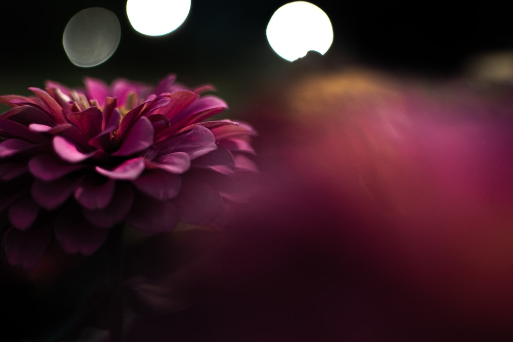 selective focus photography of pink petaled flwoer