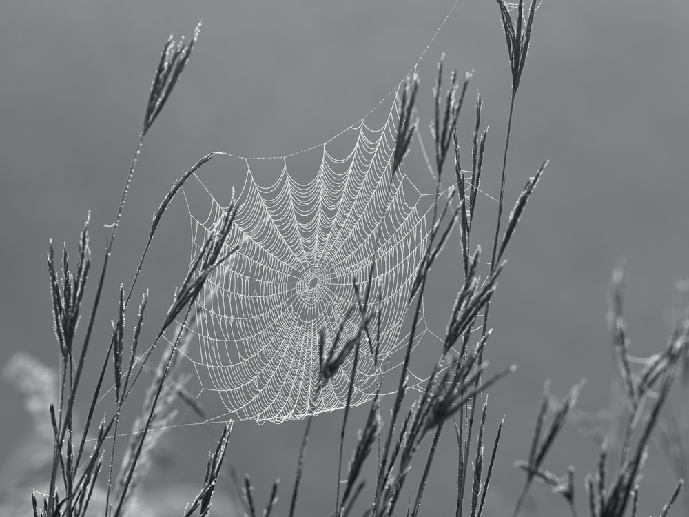 spider web on plant