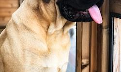 Know Before You Go: International Pet Quarantine Regulations