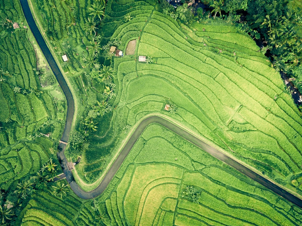 aerial view of few houses near rice field
