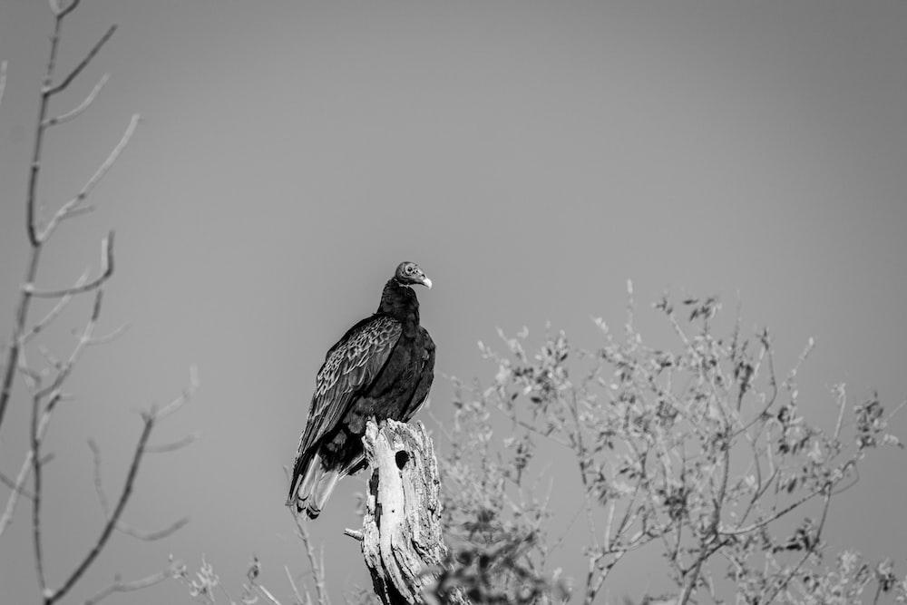 bird on bare tree