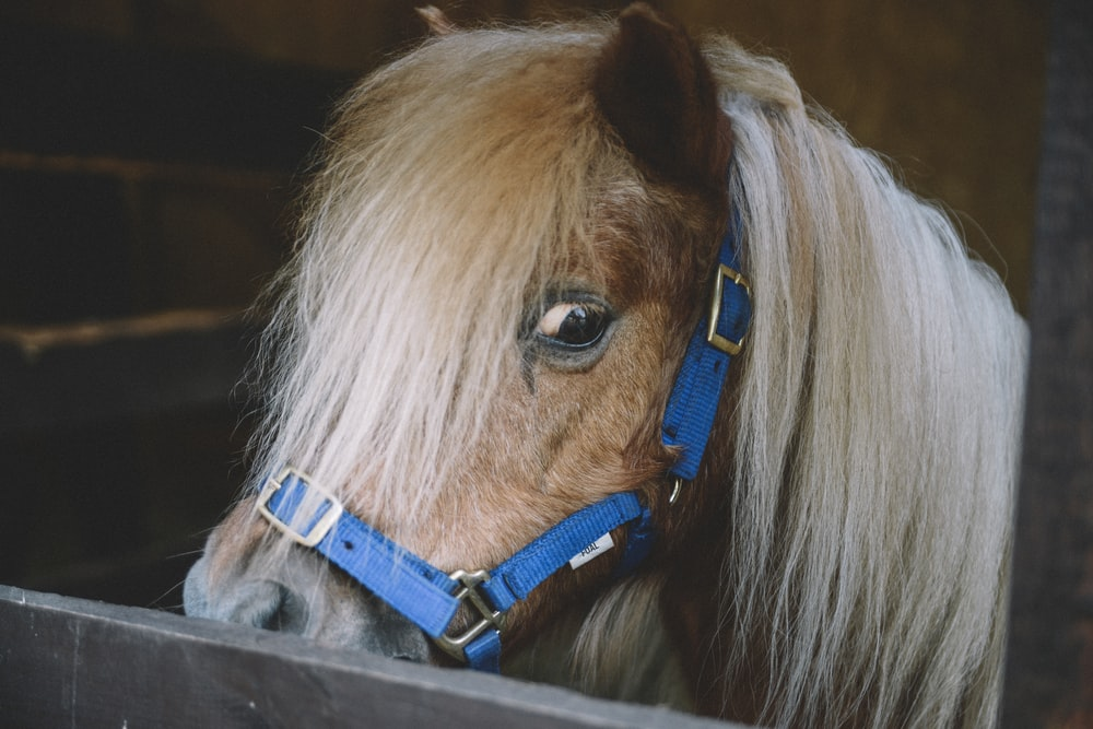 brown horse on focus photographyj