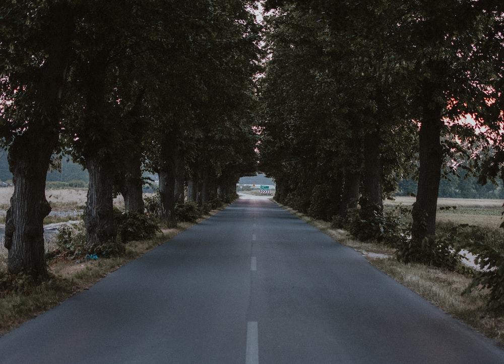 straight tree lined blacktop road