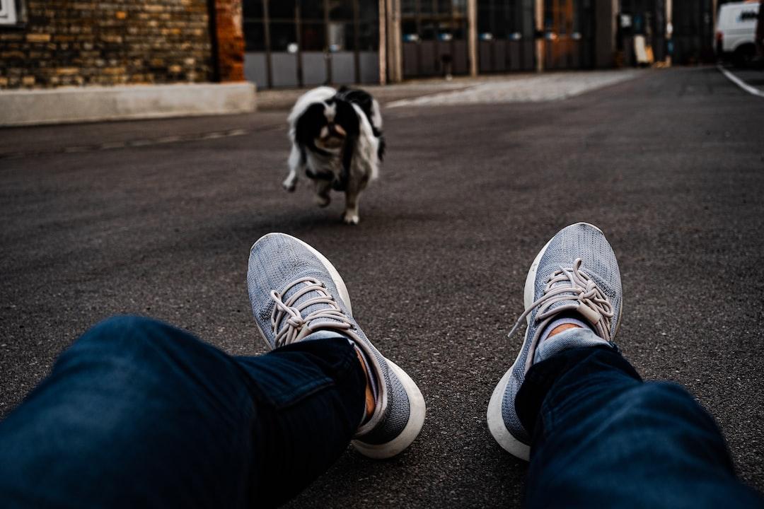 Raphael Renter • Shake • 2019  //Here you can see 'shake' the dog again. Shake in whatever mood he feels like! ....
