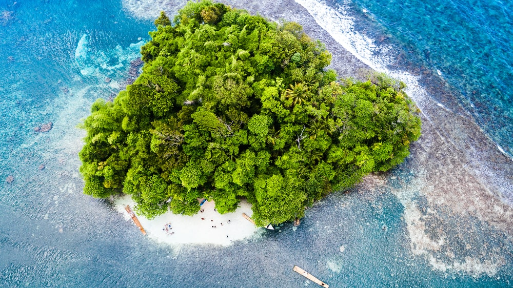 aerial photography of green trees on white island