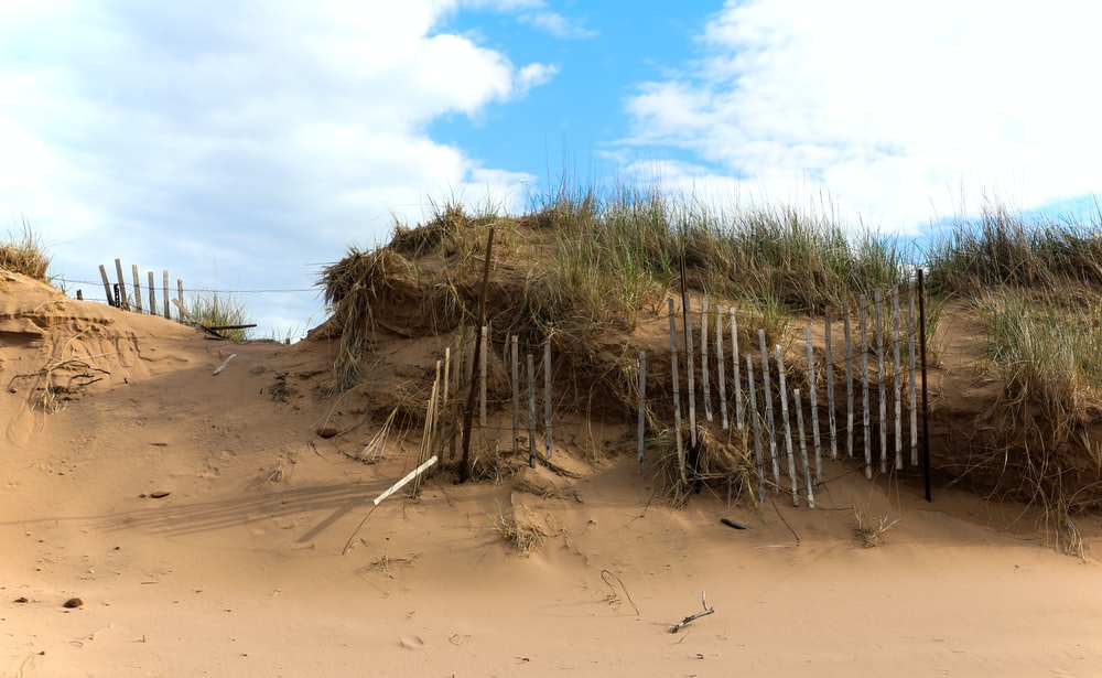 pile of bamboos on brown sand