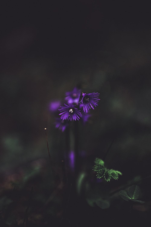 purple petaled flower close-up photography